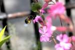 Van Wou Gardens15