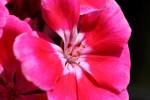 Van Wou Gardens24