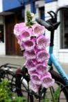 Van Wou Gardens30