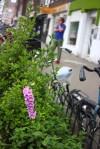 Van Wou Gardens31