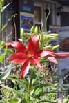 Van Wou Gardens44